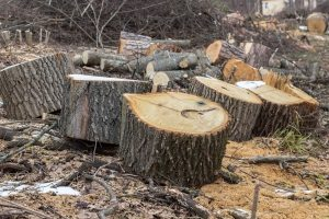 The Reason Why Your Firewood Smells Bad - For Firewood